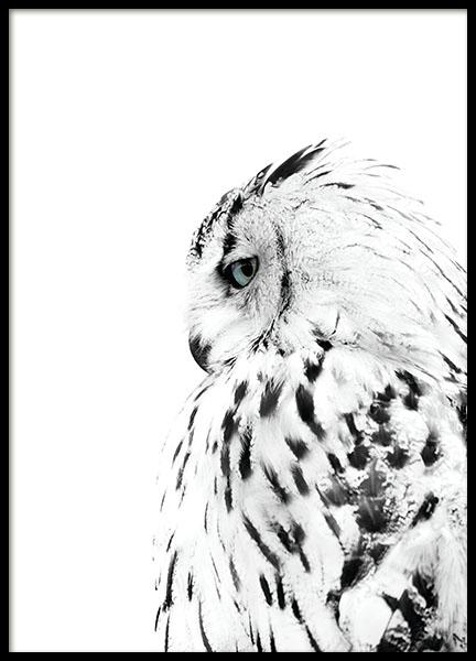 83048 White owl 50x70