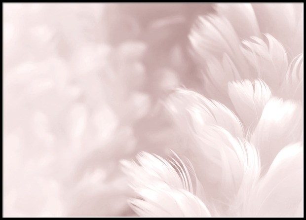 85128 Pink feathers 50x70